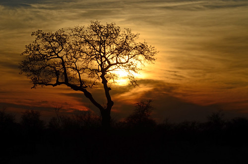 "sunset southafrica nikon soe thegalaxy kruegernationalpark stunningskies d7000 flickraward"" daarklands bestcapturesaoi elitegalleryaoi ""flickraward5"" flickrawardgallery"" blinkagain tartarin2009 nikon7000 galleryoffantasticshots magicmomentsinyourlifelevel2 magicmomentsinyourlifelevel1"