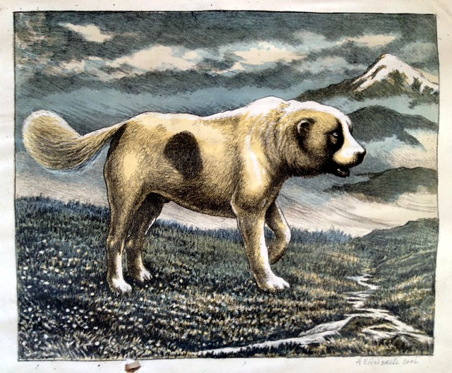 1-dog ovcharka print Litho by Arslan Tsitaishvili