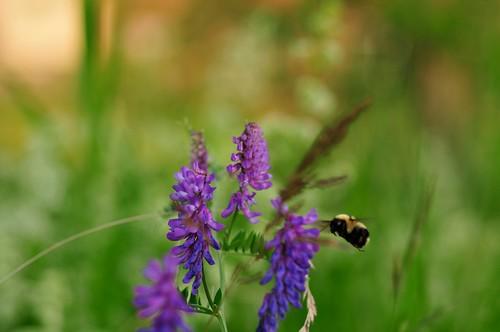 flowers bangor maine bee