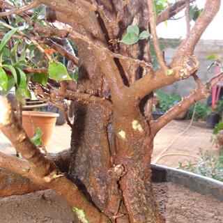 First bonsai help! 8133890255_6883dacaf2