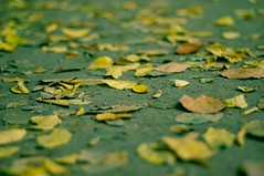 xpro Autumn