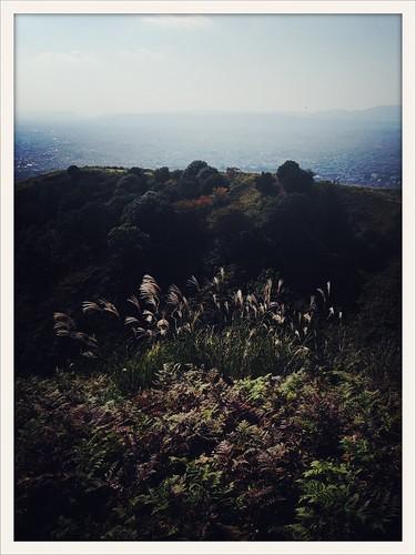 sky rural わかくさやま illumination nara foliage japanese faizallalani pampas bright 日本 warm nonhdr urban 奈良 iphoneography beautiful mountain grass trees japan glow black 奈良公園 山 life すすき photography nature wakakusayama park iphone