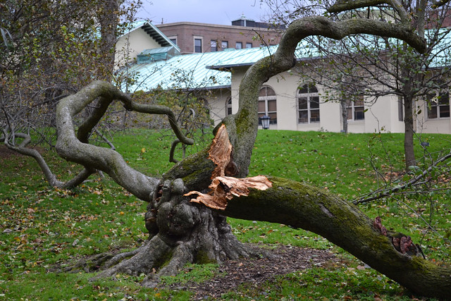 Hurricane Sandy had a substantial impact on the Garden's collections. Photo by Elizabeth Peters.