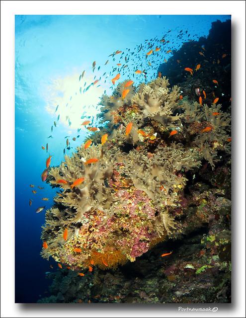 de retour de mer rouge - EGYPTE 8142676050_cafd1d8631_z