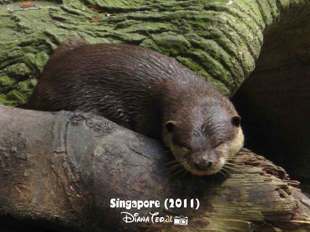 Day 3 Singapore - Zoo Singapore 05