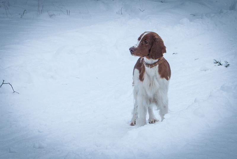 Lovely dog. Умница :)) DSC_5296
