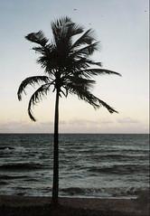 Nordeste e Sul do Brasil.
