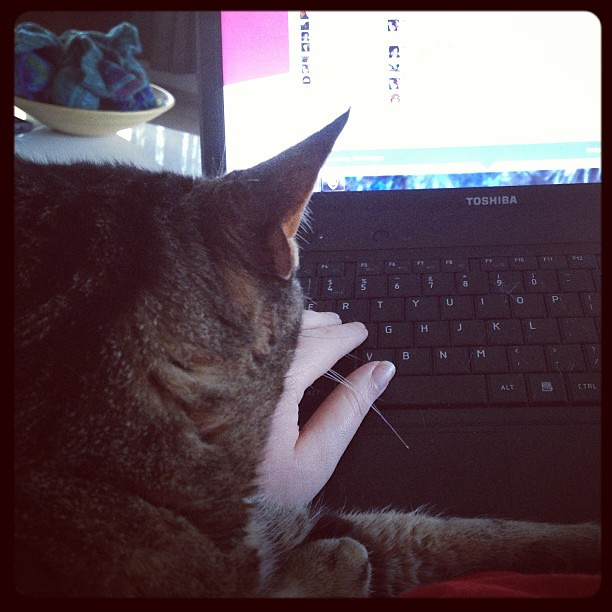 Stella's passive-aggressive call for attention. She sneaks up slow until she's crushing my arm and I can't type.