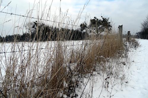 Winterstimmung Zaun