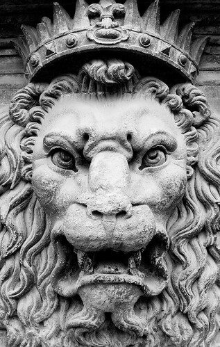'King of Beasts' by  Thomas Hawk