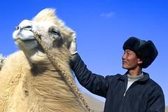 Kameltrekking in der Wüste Gobi. Foto: Bruno Baumann.