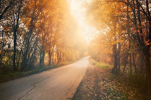 Foggy autumn by dyadyavasya