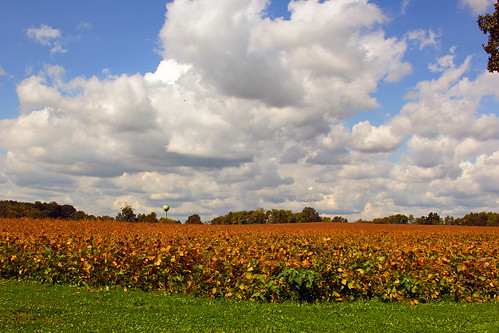 county new autumn fall corn farm nj jersey monmouth allentown