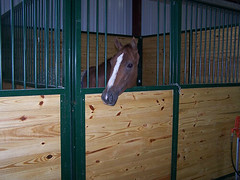 Stables at Equestrian Lakes in Finchville KY