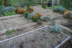 frost protected garden 038