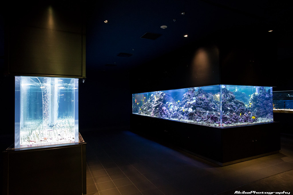 sumida-aquarium#17