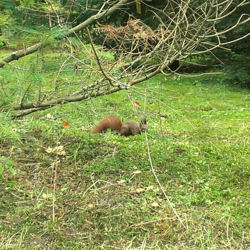 Day 14: makes me laugh #squirrels #FMSphotoaday #fmsphotoadayoctober #makesmelaugh #instadaily #instagood #instamood #squirrels