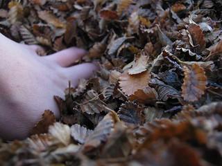 mano en otoño
