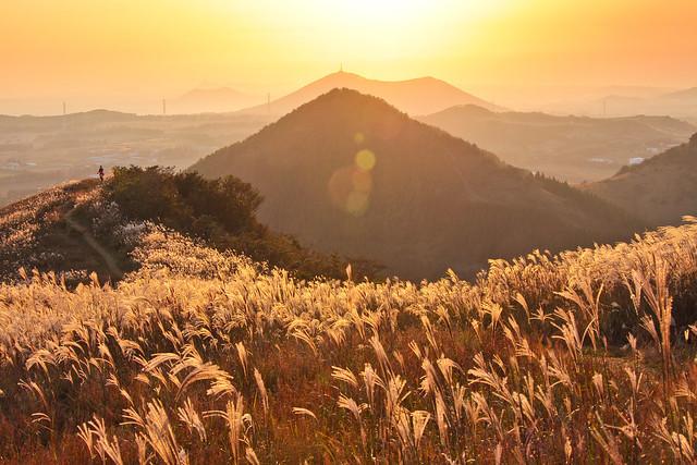 On Golden Hills