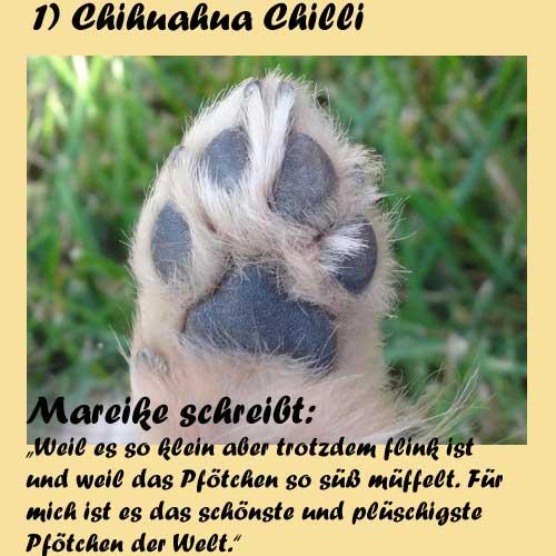 1-Chihuahua-Chilli