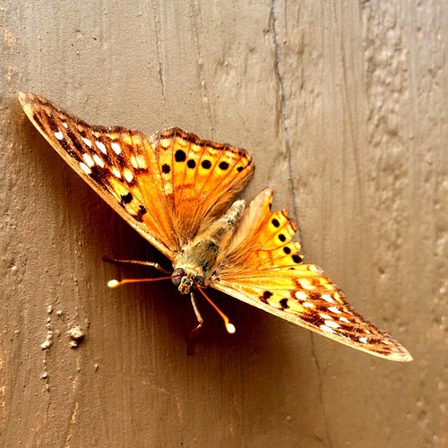 Hi! #fall #orange #bug #butterfly