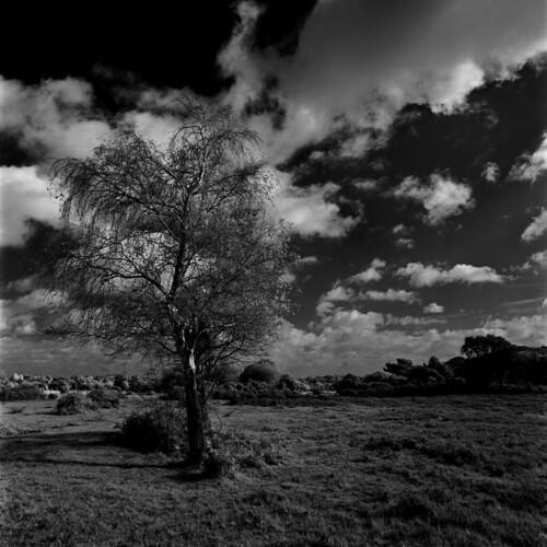 uk england sky blackandwhite bw cloud tree 120 6x6 film grass rollei ir mono hampshire bronica heath infrared birch rodinal plain newforest r72 standdevelopment s2a ocknell highlandwater ocknellplain zenzabronicas2a infrared400 zenzanonmc40mm14 s2am050 filmdev:recipe=8005