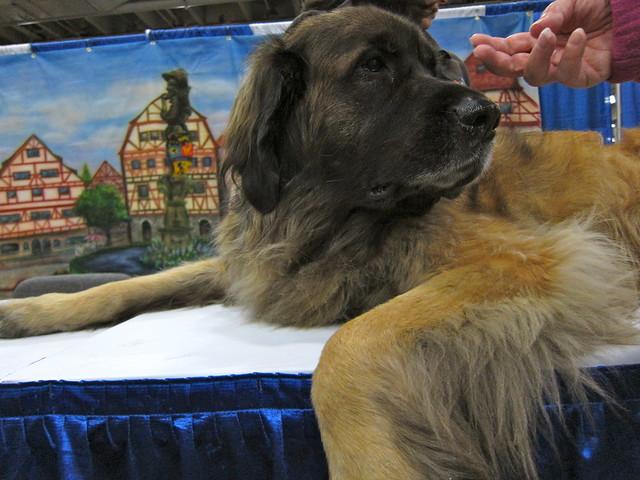 meet the breeds october 2012