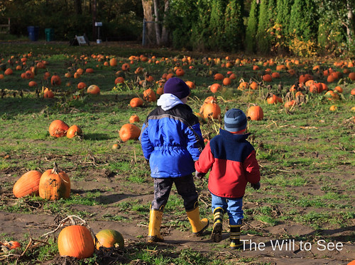 pumpkin patch 2012 #2