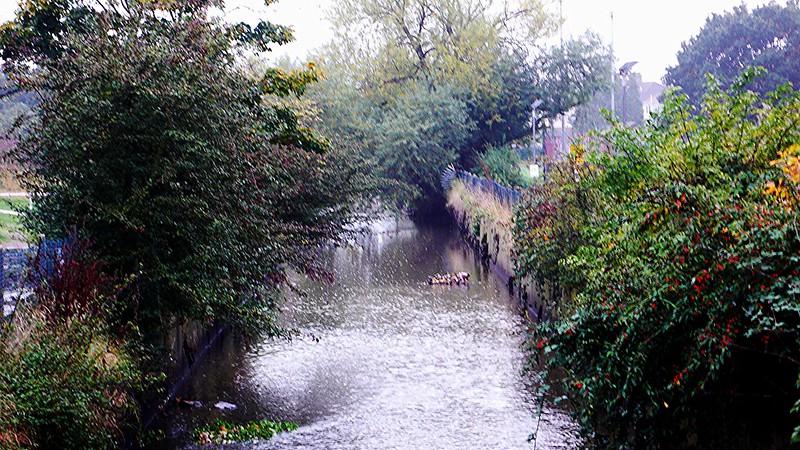 River Rom