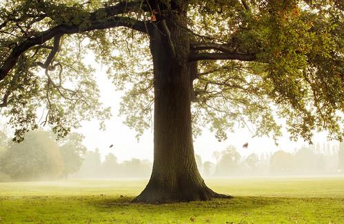 [フリー画像素材] 自然風景, 樹木 ID:201210311200