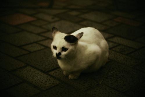 [フリー画像素材] 動物 1, 猫・ネコ ID:201210311000