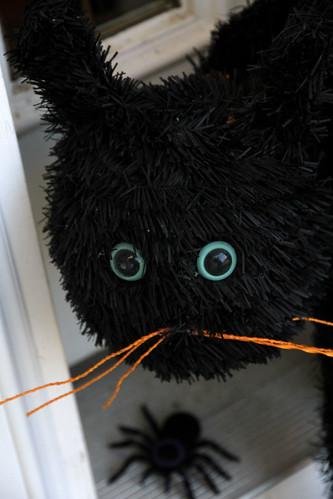 scaredycat_closeup