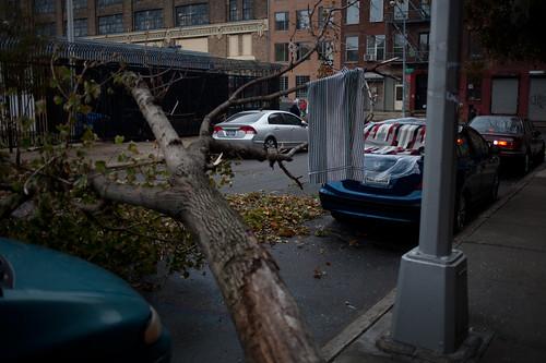 Car window smashed by fallen tree