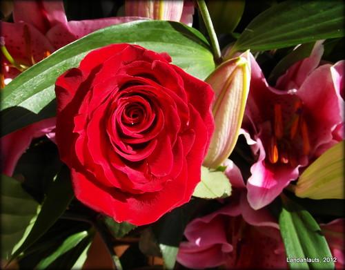Flores del recuerdo