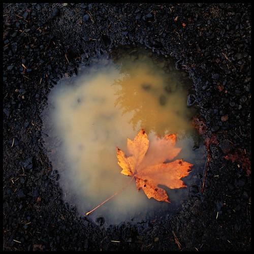 boilerpuddle by Nature Morte