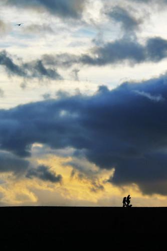 sunset west bird silhouette clouds bay coast gull dorset jurassic
