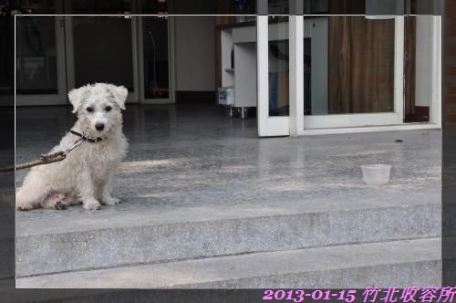 親人小白狗 (5)