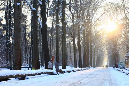 trees winter sunset people sun sunlight snow cold nature forest walking zonsondergang sneeuw perspective natuur breda bos zon koud mastbos perspectief pimvdh pimvandenheuvel