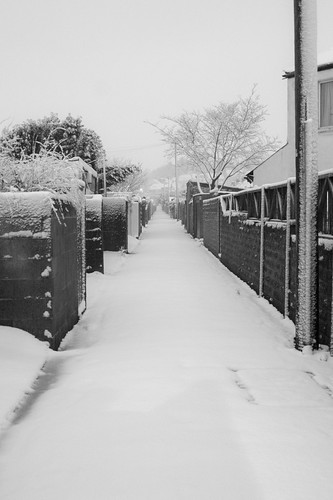 Alley in the snow