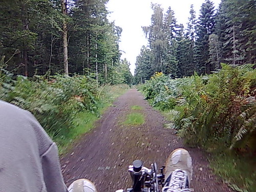 Zipping through one of the few foresty bits.