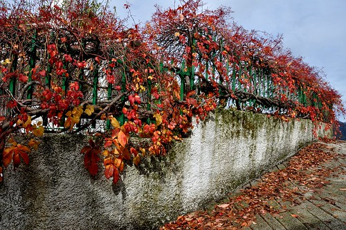 Autumn fence.