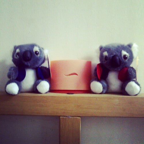 baby koala #gift from @ree_geminiac from Australia ..thank you so much..