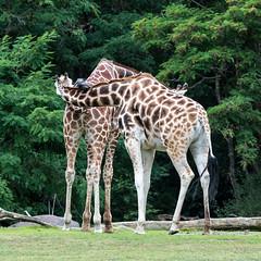 20160806-Zoo-3741