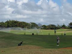 Kauai Lagoon Golf Club 1185