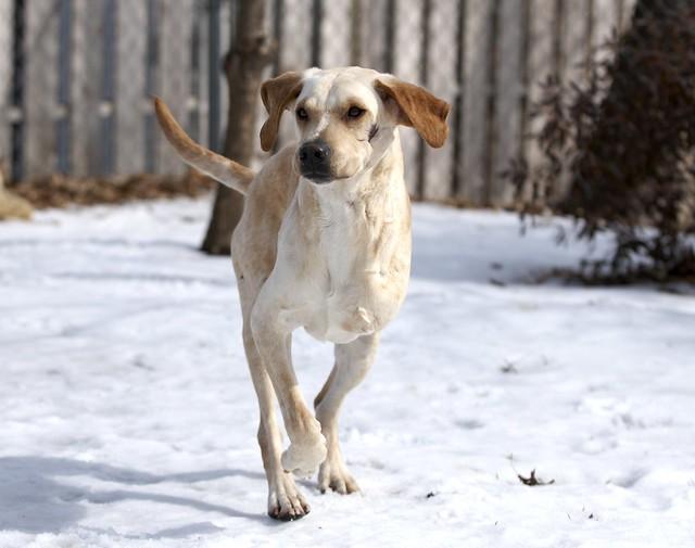 Scar Dog Rescue London Ontario