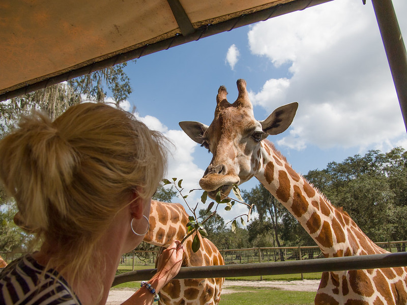 Giraffe Ranch - Dade City