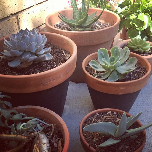 Planted #succulents