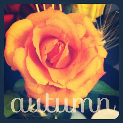 Autumn #typic