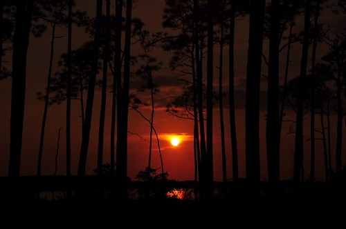 pink sun beach water birds sunrise mexico sand skies gulf florida dunes sunsets seagrove