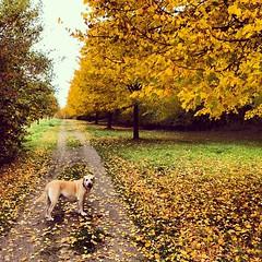 Gestern Nachmittag -- Herbstspaziergang!!